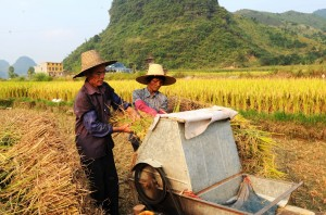 In 2008, China subsidized rice farming and increased export duties to increase domestic food security [Xinhua]