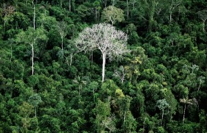Brazil had enacted a controversial law in October 2012 that meant to protect forests and force farmers to replant trees on large swathes of illegally cleared land [Getty Images]