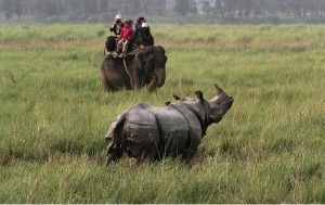 India is the current chair of the UN Convention on Biological Diversity [AP]