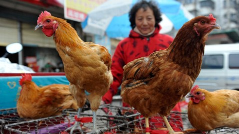 Human infections with a new avian influenza A (H7N9) virus were first reported in China in March 2013 [AP]