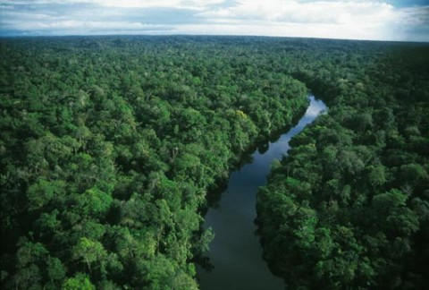 The corridor will span 135 million hectares (1,350,000 sq km) of rainforest, Santos said Friday [Xinhua]