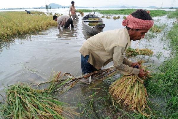 Millions of small farmers are struggling to survive as erratic weather hits their only source of income [Xinhua]