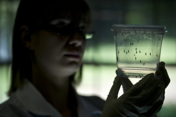 Brazilian scientists continue to find other possible Zika links to brain diseases [Xinhua]